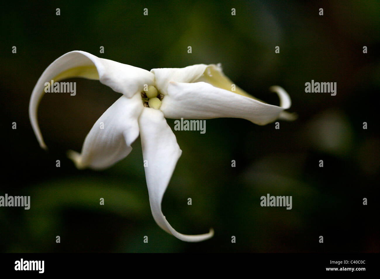 White Petals 5 Stock Photos White Petals 5 Stock Images Alamy