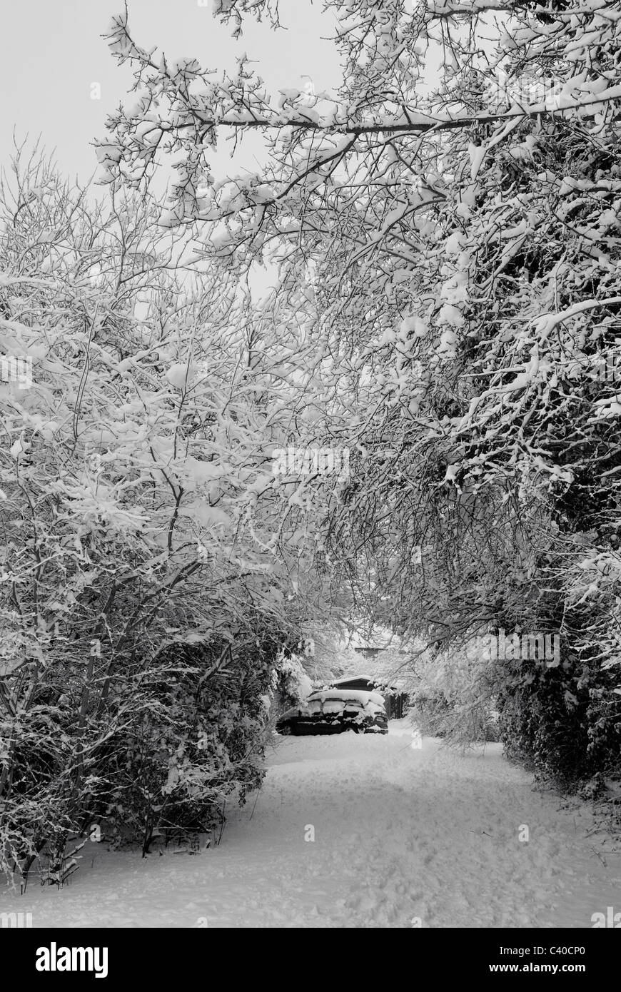 Photograph of car parked on the other side of the tress, near Farrindon way, Tadley, England, UK, United Kingdom. - Stock Image
