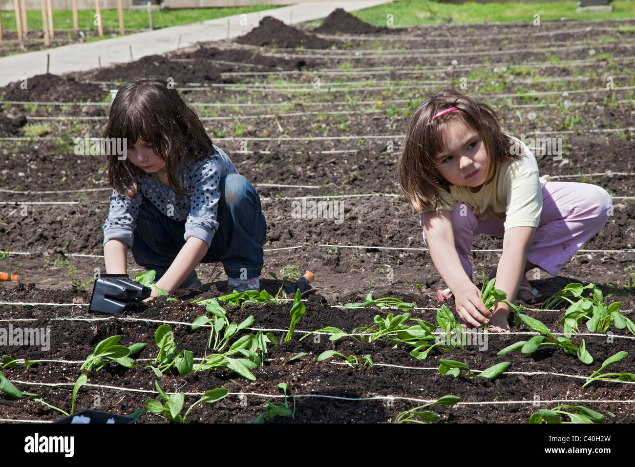 Girl Scouts Help Plant Garden to Grow Produce for Community Food Bank - Stock Image