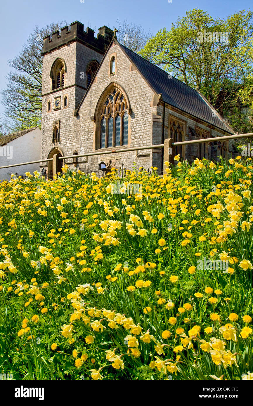 The little St Anne's church Miller's Dale in the Derbyshire Peak District with a bank of daffodils and dandelion - Stock Image