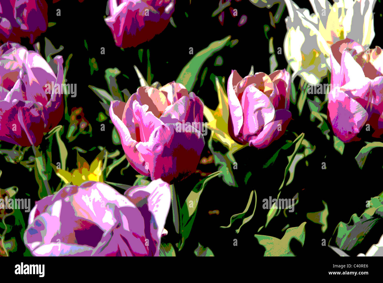 tulips, posterized in Photoshop - Stock Image