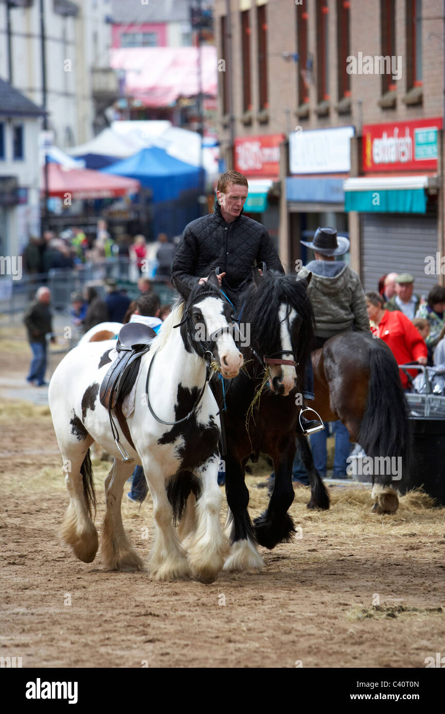 man riding horses on display at the ballyclare may fair county antrim northern ireland - Stock Image