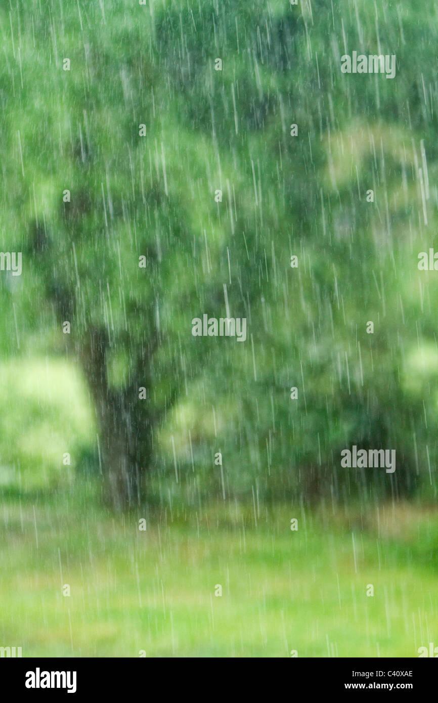 rainfall - Stock Image