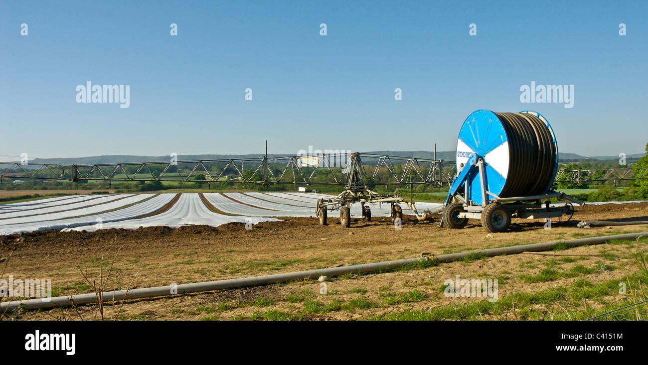 Intensive Farming Stock Photos & Intensive Farming Stock