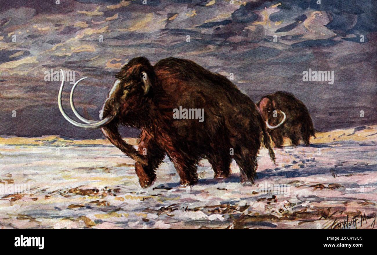 prehistory, animals, mammoth in the snow, prehistoric animal, mammoths, Pliocene, elephant, elephants, extinct, - Stock Image