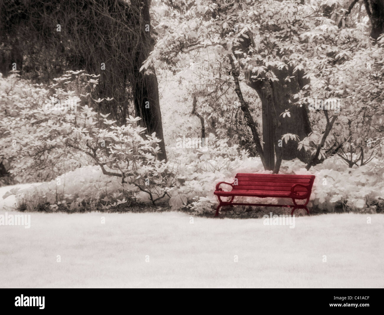 Park Bench Photographed in Infrared Eugene, Oregon - Stock Image