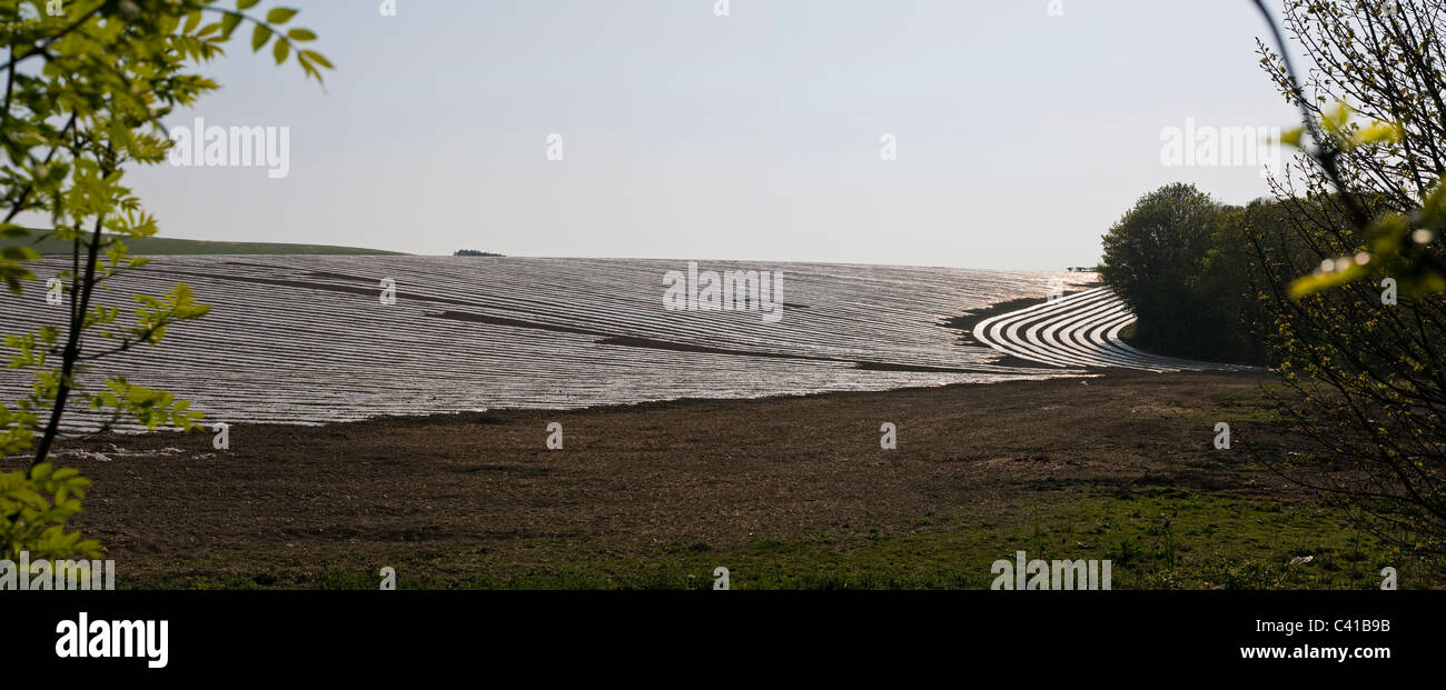 Panorama of a field spread with plastic sheeting to promote growth and protect seedlings - Stock Image