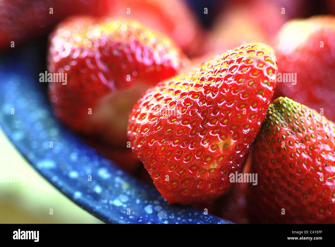 Fresh ripe strawberries in a vintage cobalt blue enamel colander Stock Photo