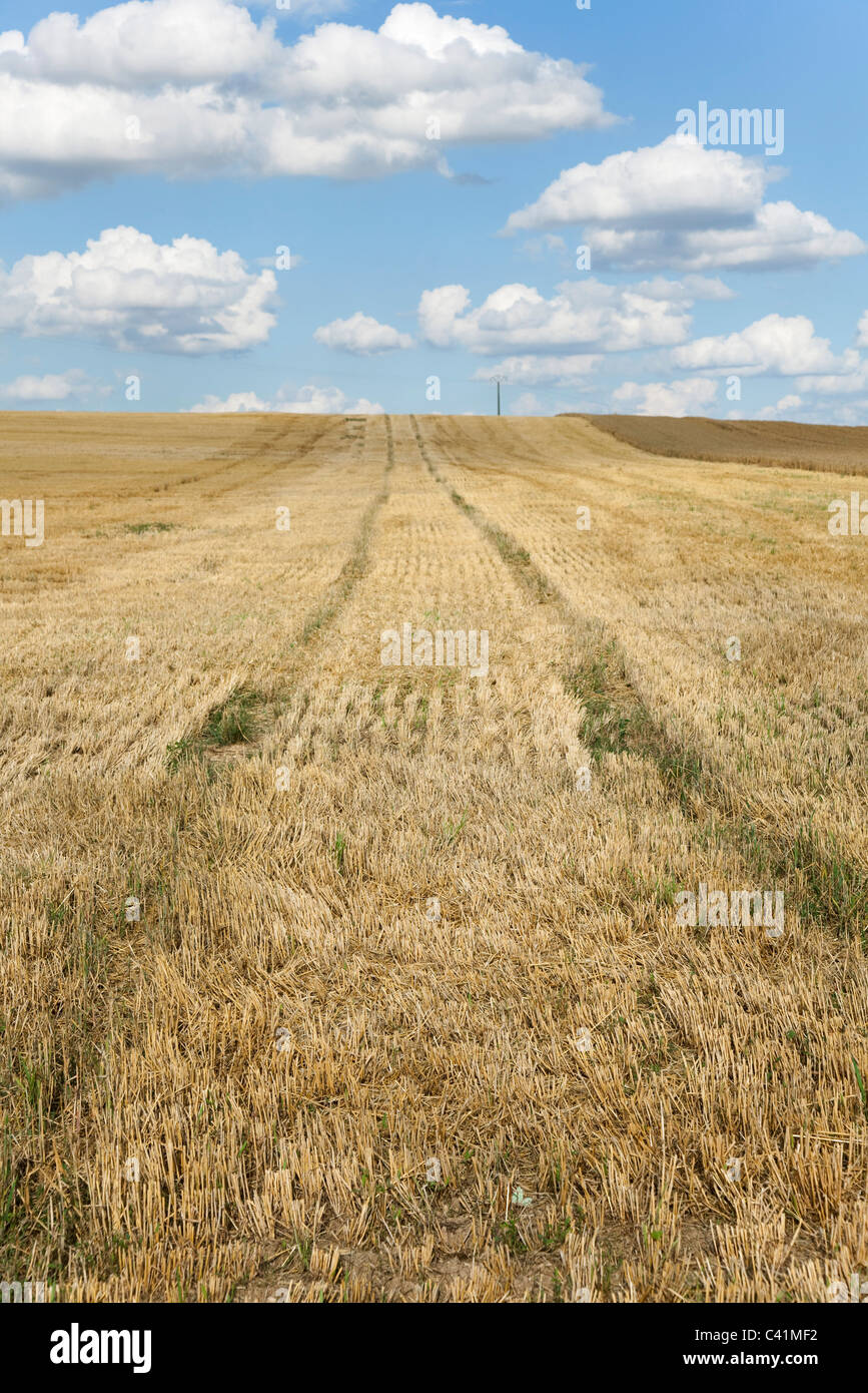 Tire tracks in wheatfield - Stock Image