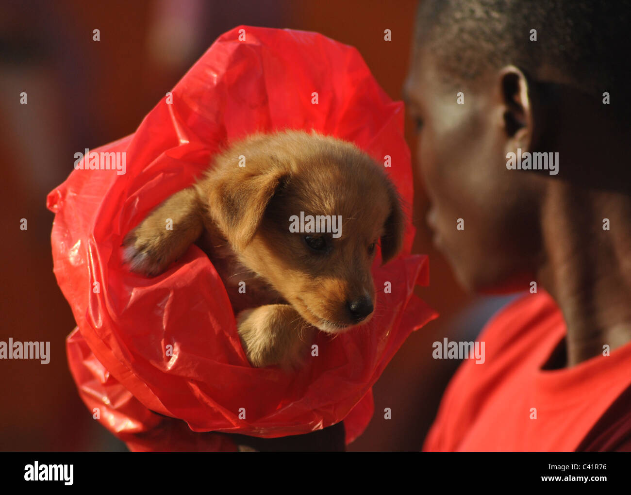 Puppy in a plastic bag, Ivory Coast, West Africa - Stock Image