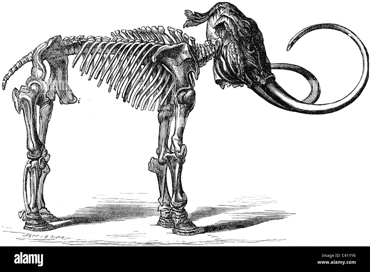 19th Century book illustration, taken from 9th edition (1875) of Encyclopaedia Britannica, of Mammoth Skeleton - Stock Image