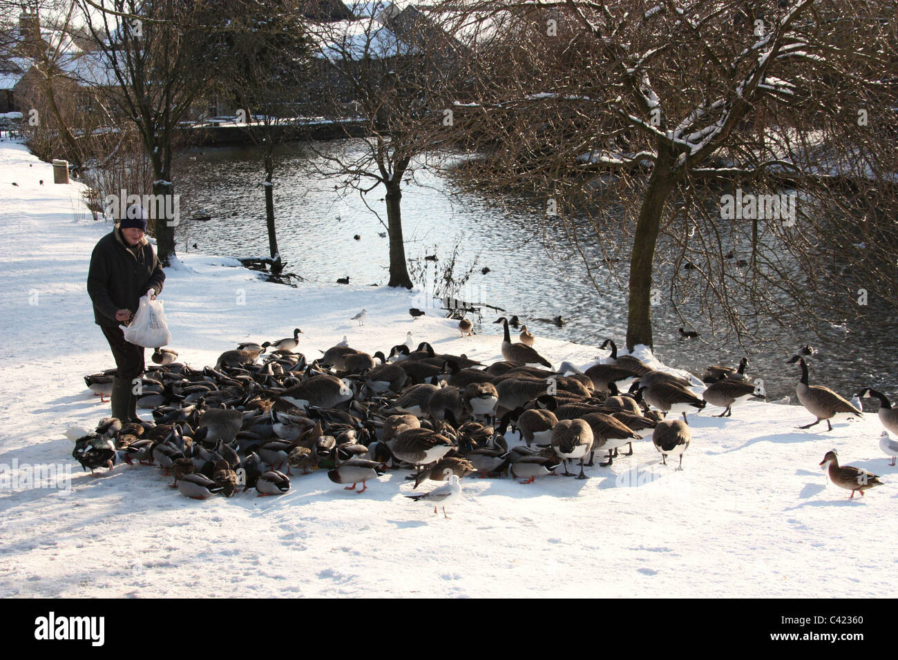 Graham Skidmore feeding the ducks in Bakewell Stock Photo