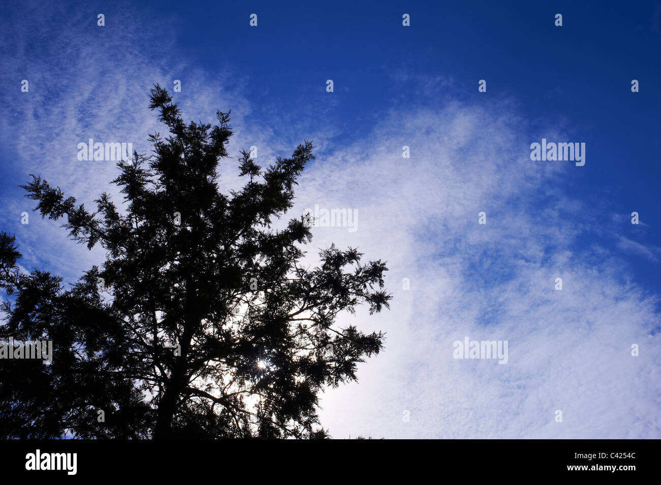 Silhouetted tree against blue cloudy sky - Stock Image
