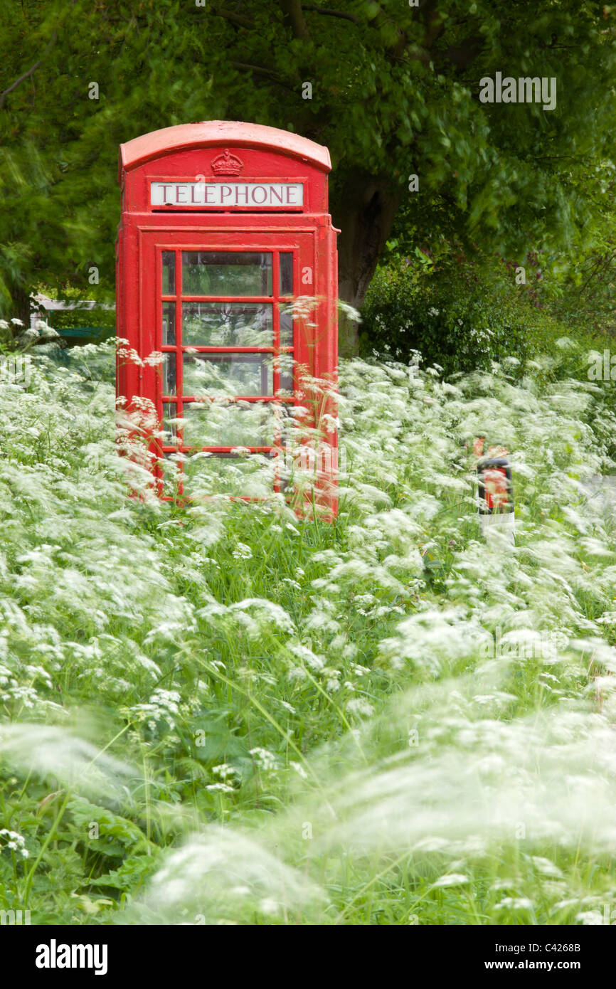 Rural telephone kiosk surrounded by cow parsley, on a breezy day - Stock Image