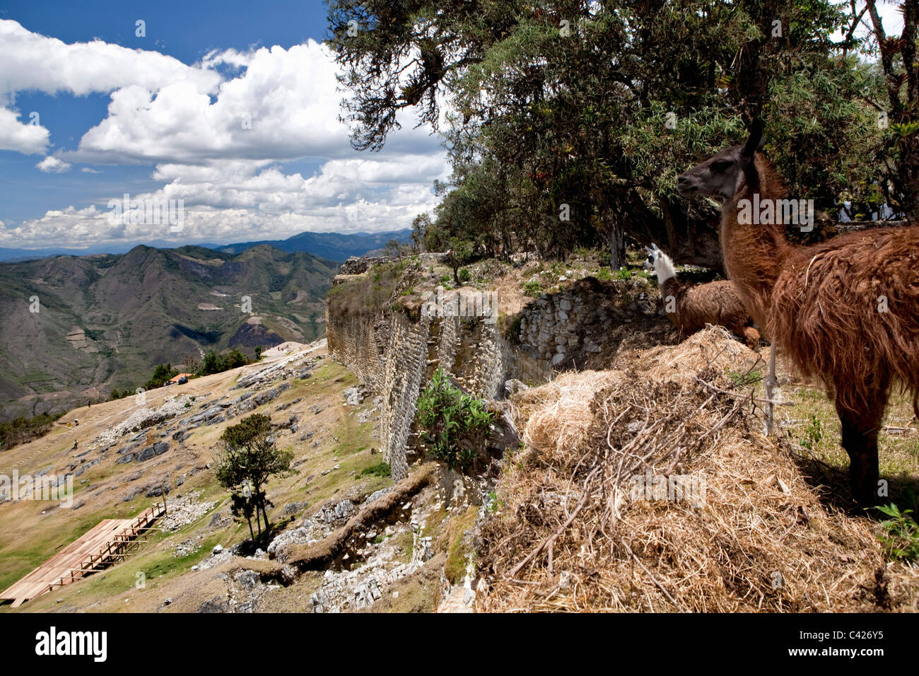 Peru, Chachapoyas, Kuelap mountain settlement and citadel city, built by the Chachapoyas culture (900-1200 AD). - Stock Image