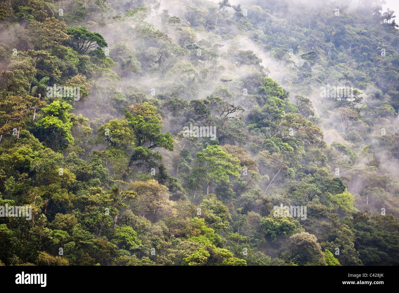 Peru, San Pedro, Manu National Park, Cloud forest. UNESCO World Heritage Site. - Stock Image