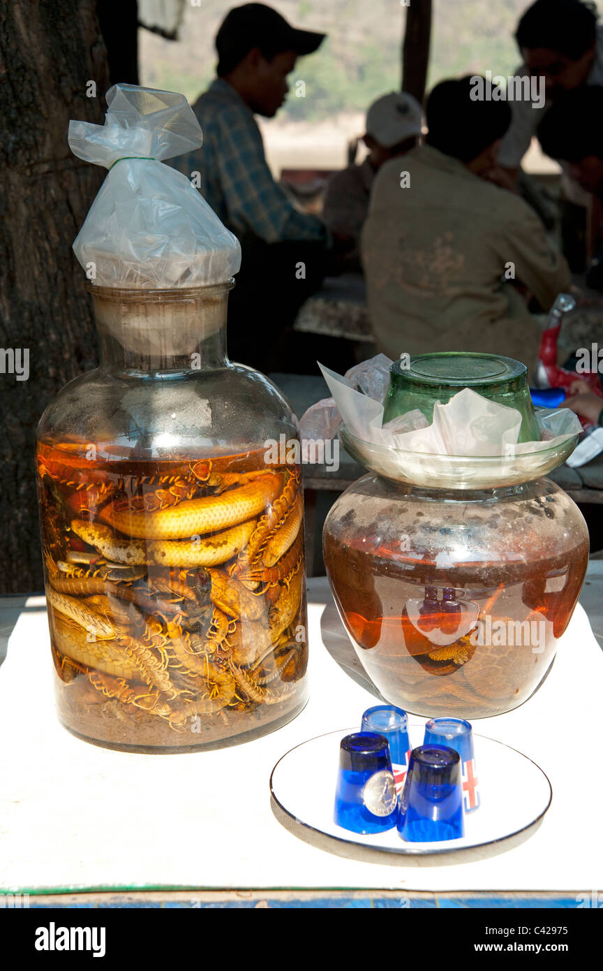 Snake rice wine jars and silhouetted drinkers in Luang Prabang the old Royal capital of Laos - Stock Image