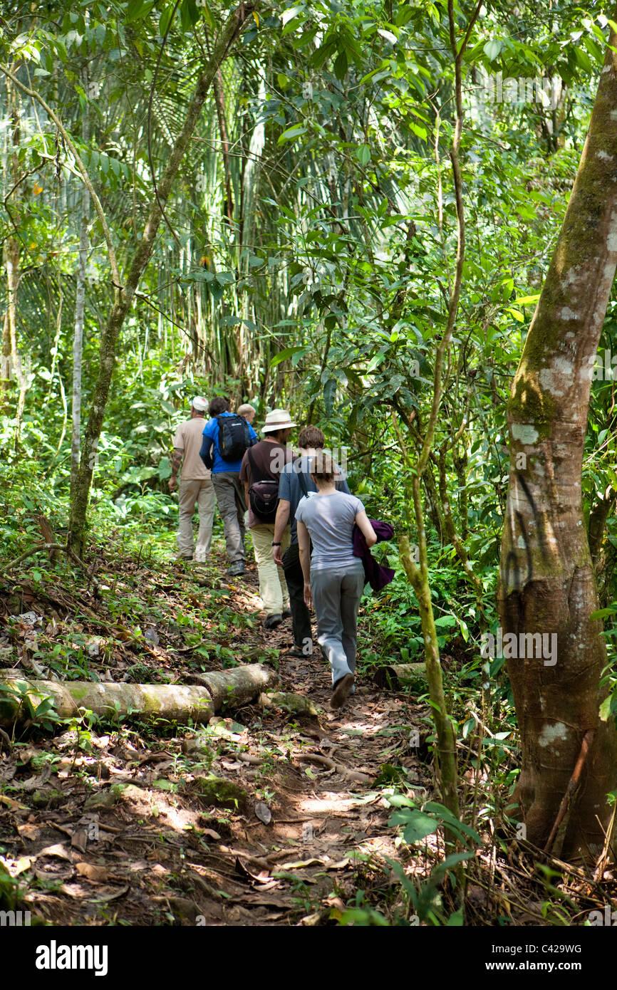 Peru, Boca Manu, Manu National Park, UNESCO World Heritage Site, Tourists hiking in forest. - Stock Image