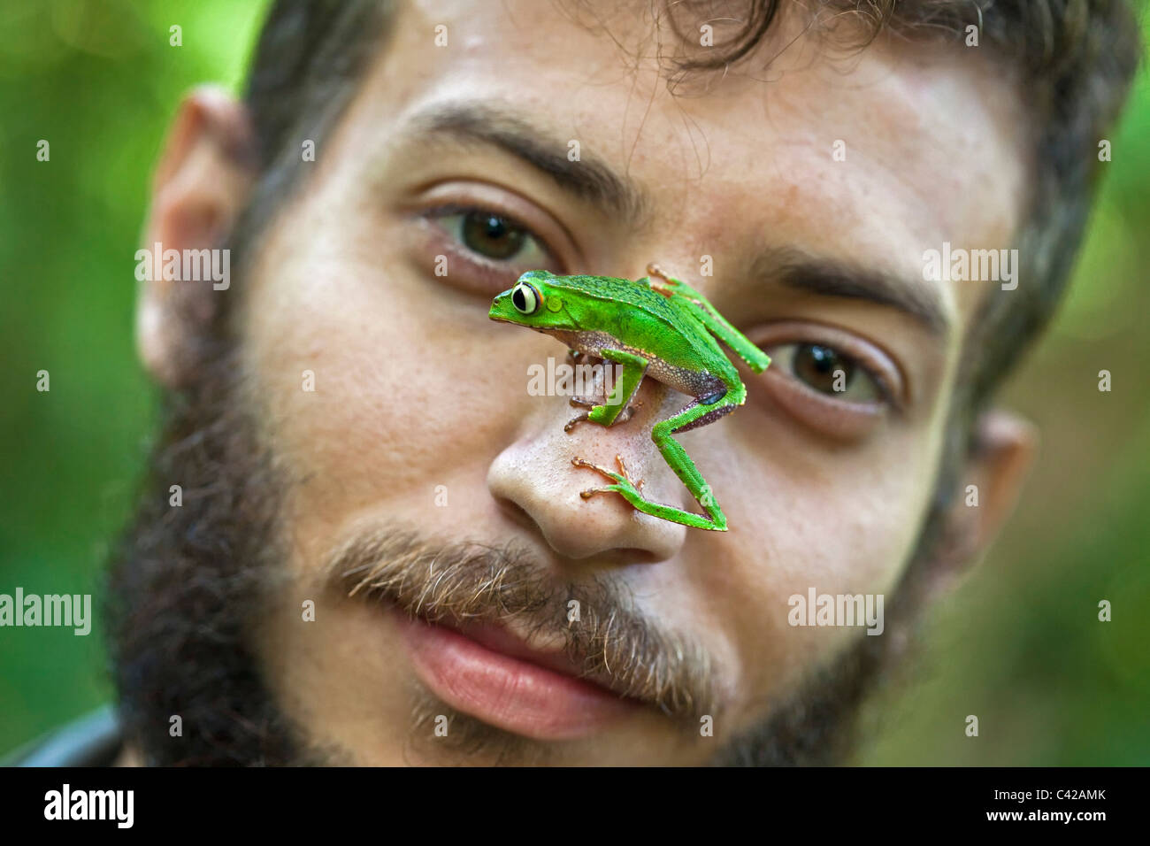 White lined leaf frog ( (Phyllomedusa vaillanti ) on face of researcher / biologist / herpetologist Alejandro Montoga - Stock Image
