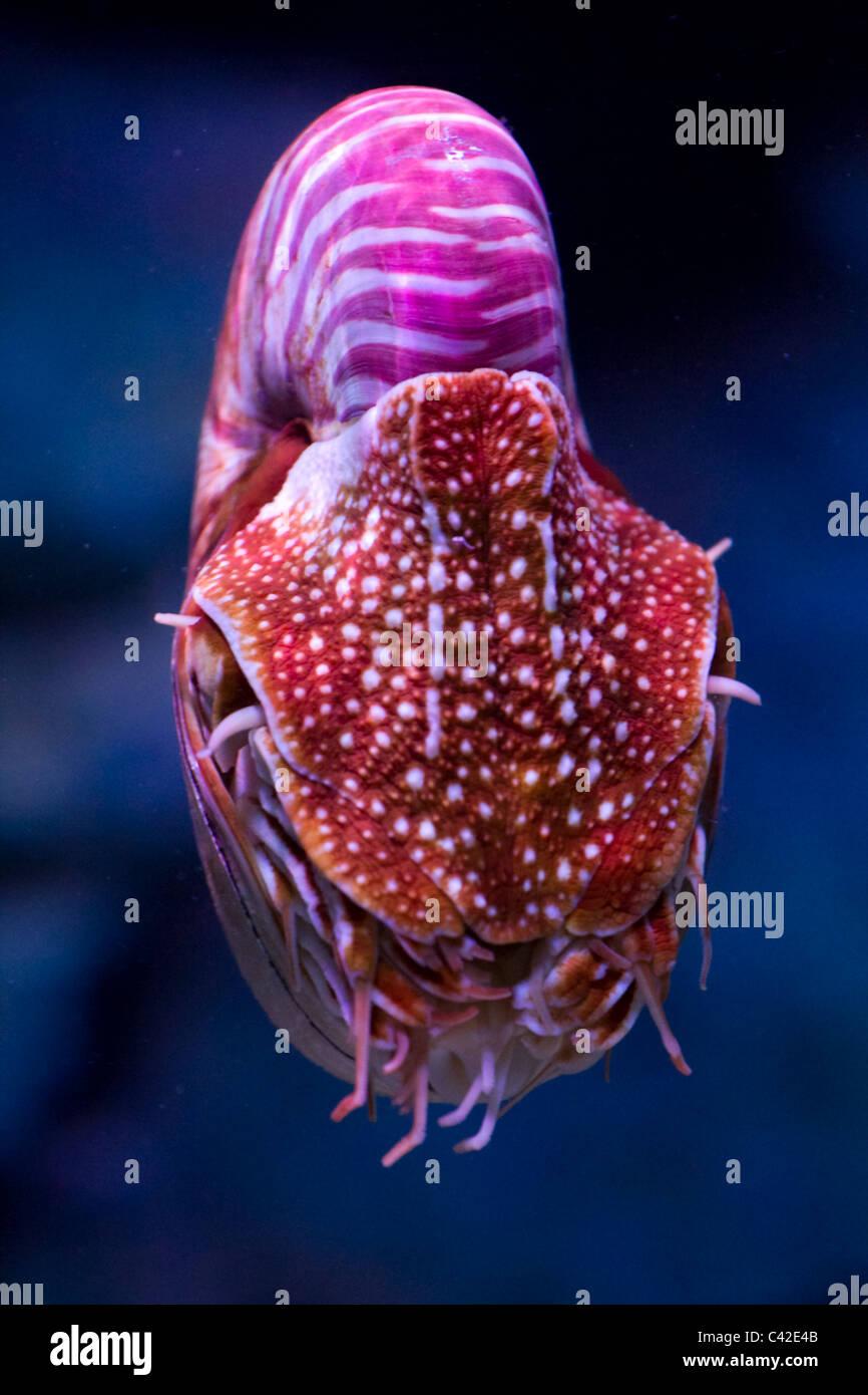 Squid - Stock Image