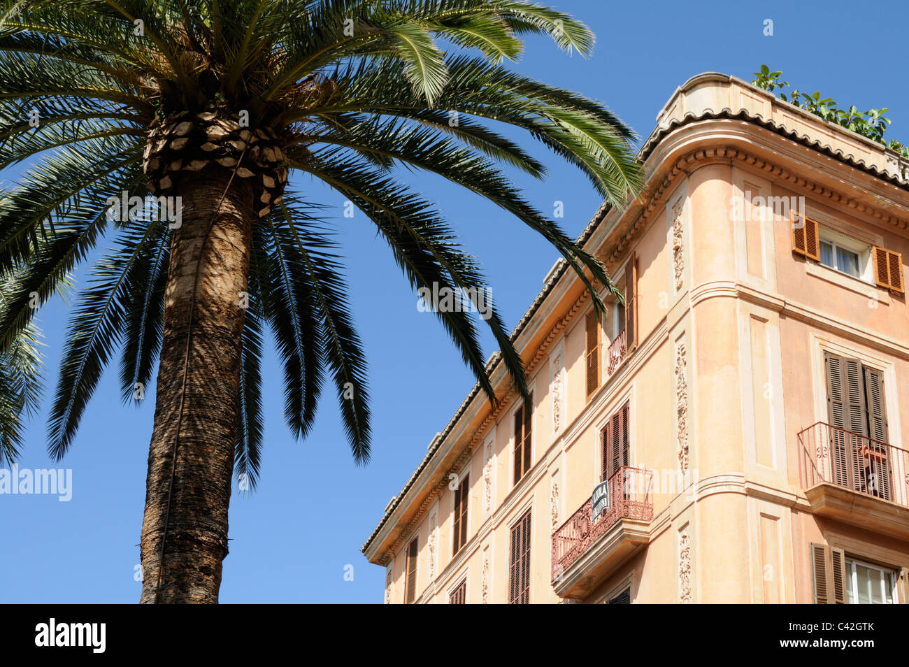 Haus und Palme vor blauem Himmel, Palma, Mallorca, Spanien. - House and palm tree against blue sky, Palma, Majorca, Stock Photo