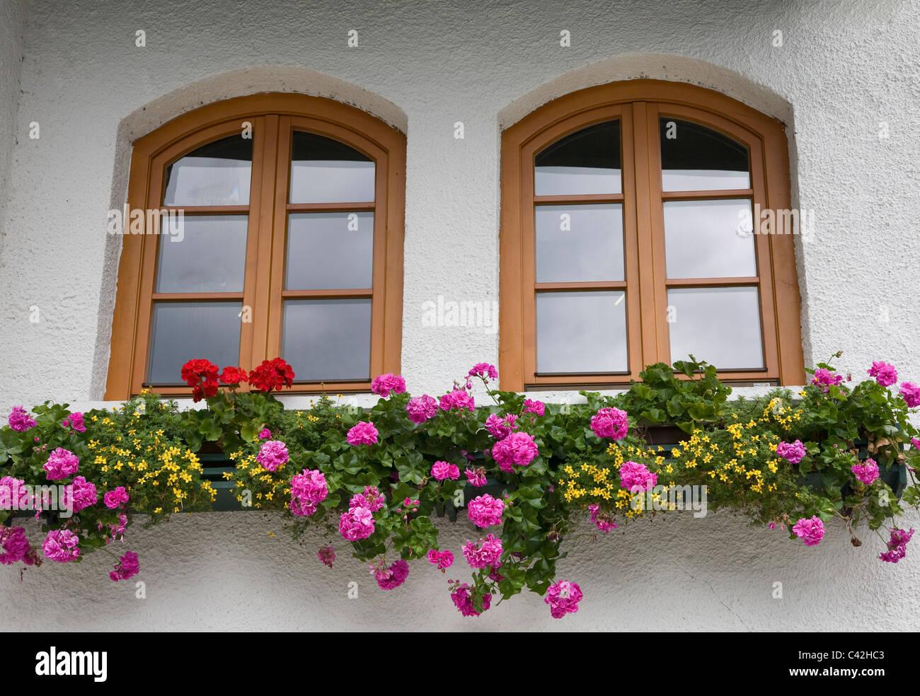 Windows and flower box in Hallstatt Austria - Stock Image