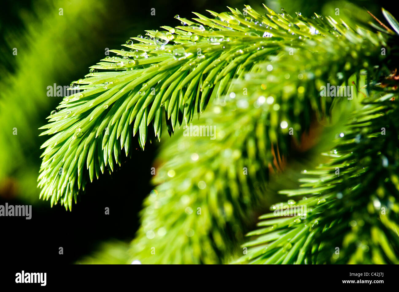 Water Tree Fern Stock Photos Water Tree Fern Stock Images Alamy