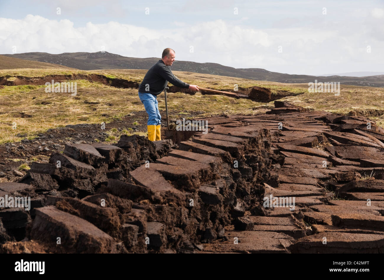 Man cutting peat blocks stacked for drying as traditional fuel. Shetland Islands, Scotland, UK, Europe. - Stock Image