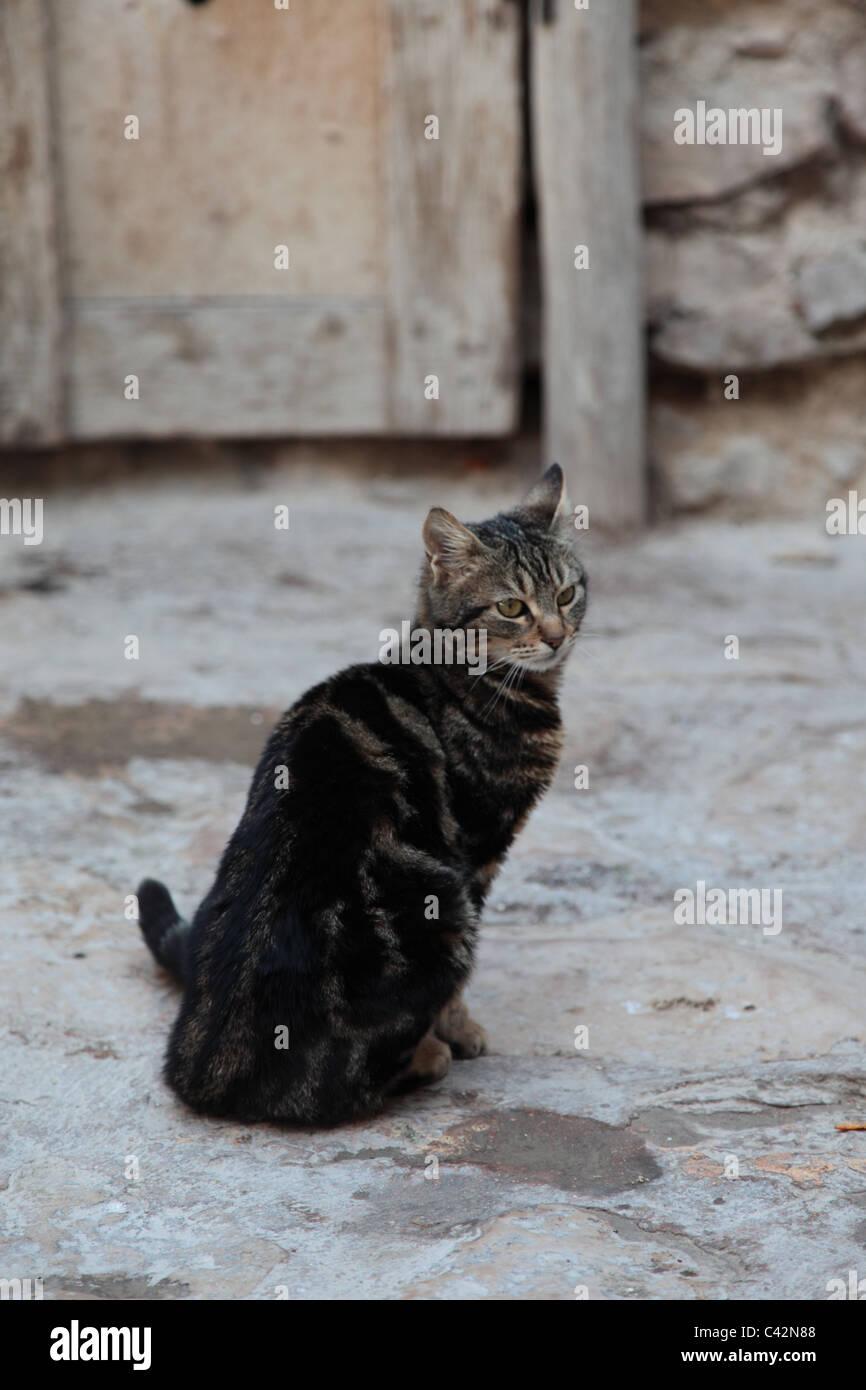Monastery cat, Mar Musa, Syria. - Stock Image