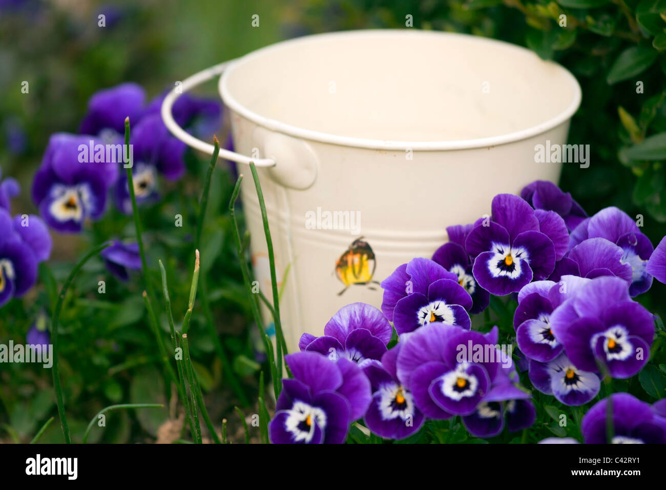Small Bucket By The Purple Spring Flowers Stock Photo 36942053 Alamy