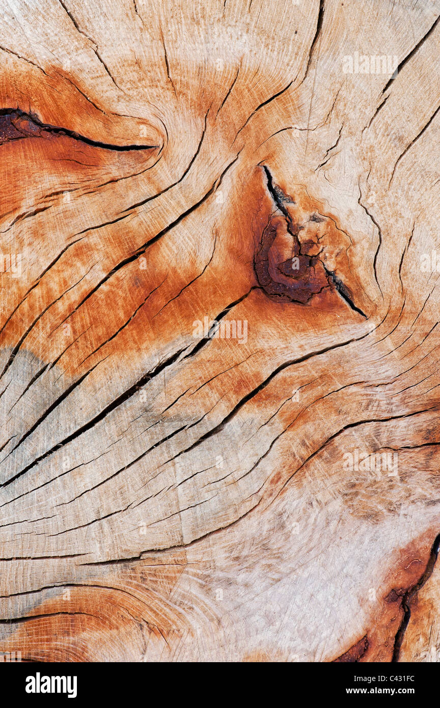 Split dead tree trunk pattern - Stock Image