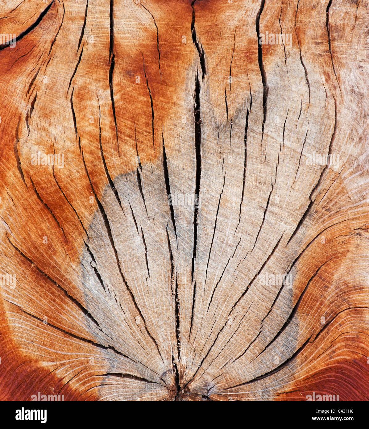 Split dead tree trunk pattern - Stock Image