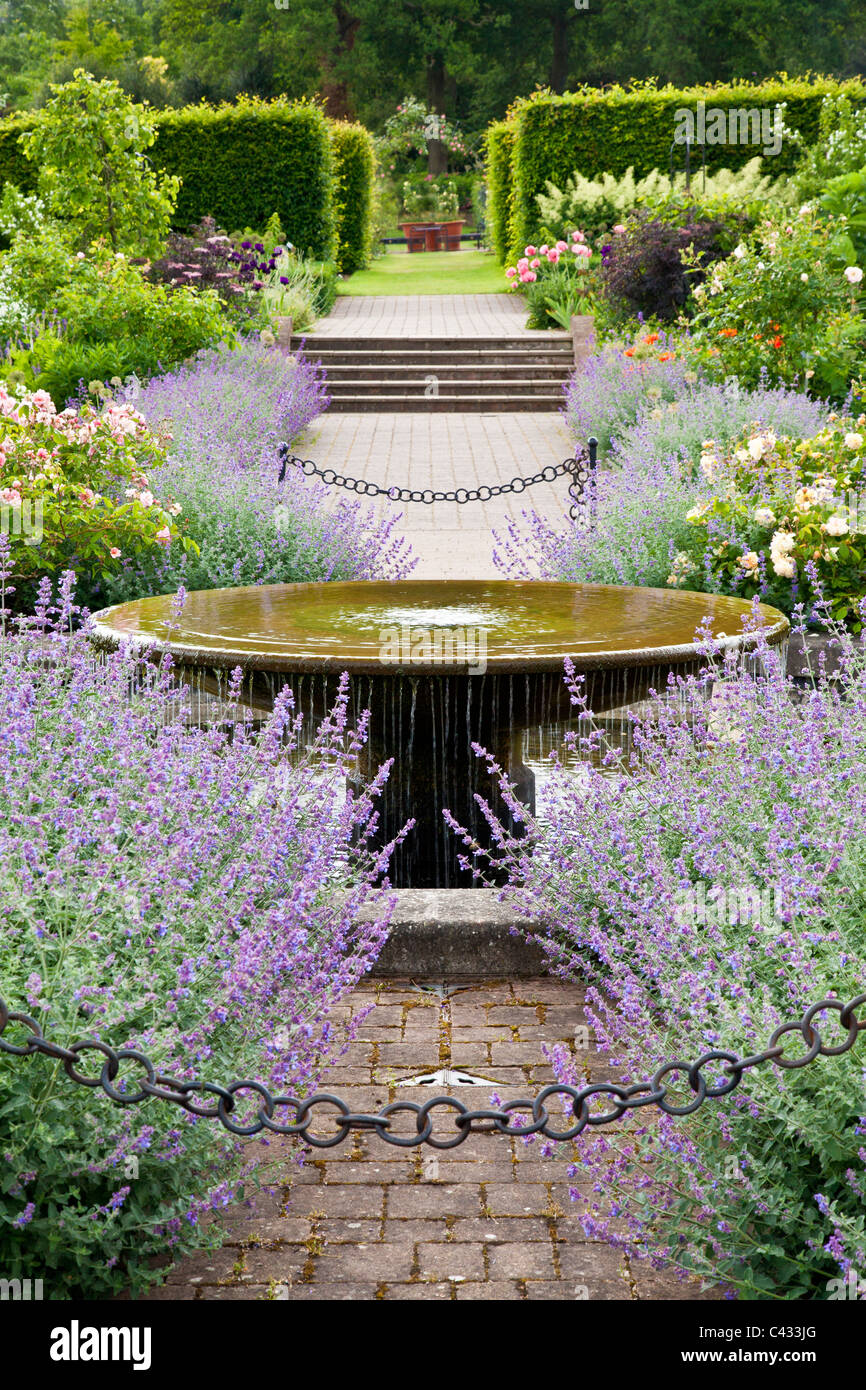 The country garden with water feature, roses and Nepeta or catmint at RHS Wisley, Surrey, England, UK - Stock Image