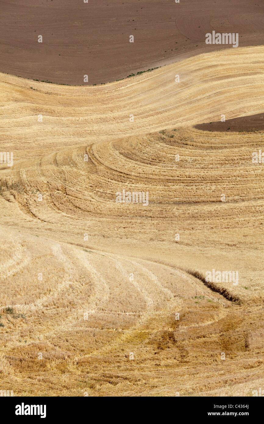 Patterns in wheat field from harvest Palouse Washington USA - Stock Image