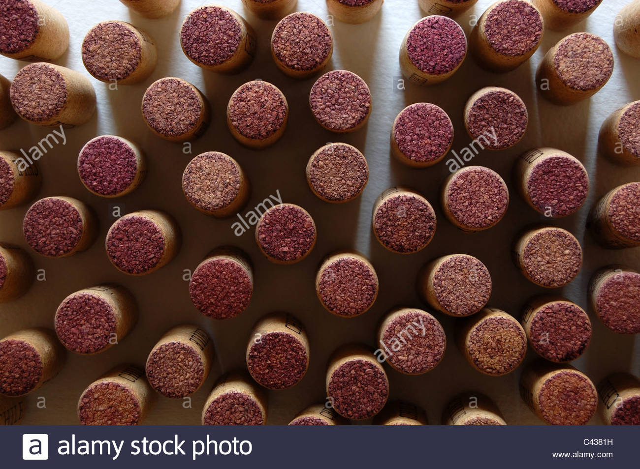 overhead tabletop studio shot closeup group of approximately 40 red wine corks standing on end natural light shadows Stock Photo