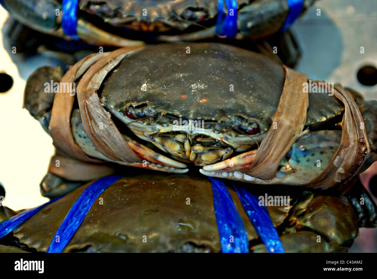 Close-up of Live Soft-shell Blue Crabs ready for sale at a