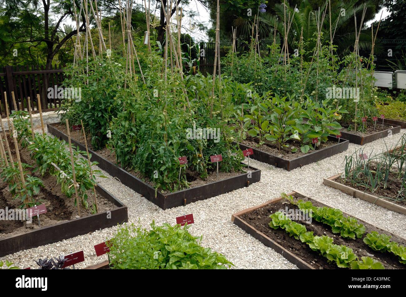 Vegetable Garden Potager Or Kitchen Garden With Tomato