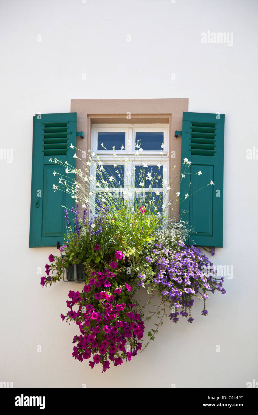 Flowers below a window with shutters - Stock Image