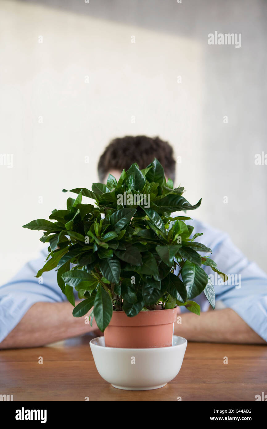 A man sitting being a potted houseplant, obscured face - Stock Image