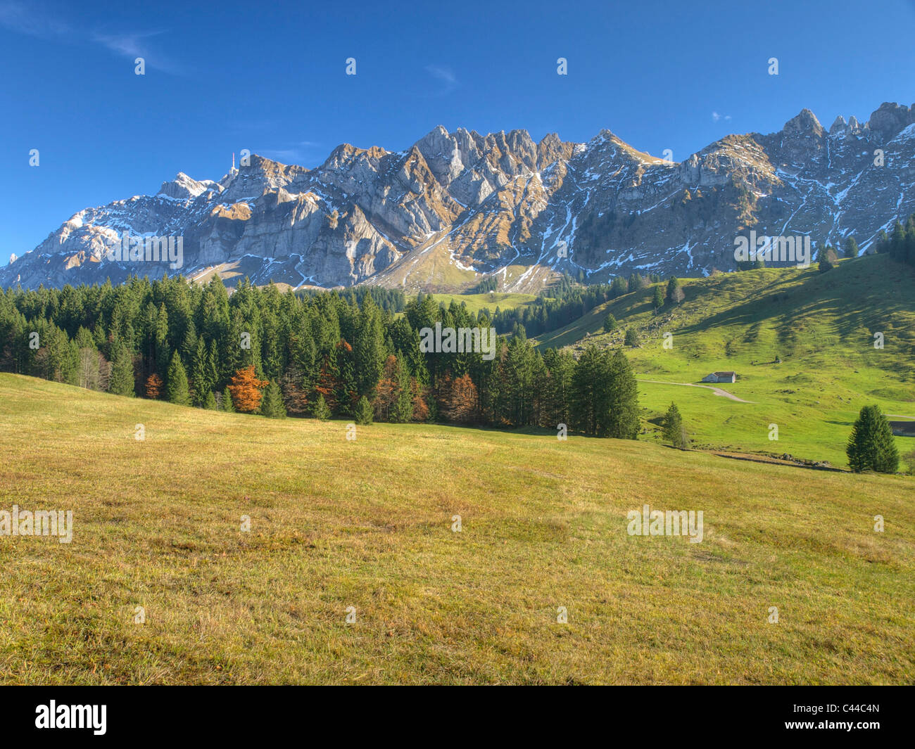 Appenzell, Santis, meadow, firs, wood, forest, Appenzell, mountain, Switzerland, - Stock Image