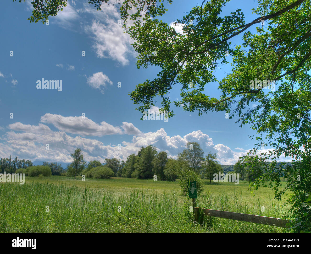 Trees, grab lake, green, nature reserve, reed, protection of birds, clouds, lakes, canton Zurich, Switzerland, lake, - Stock Image