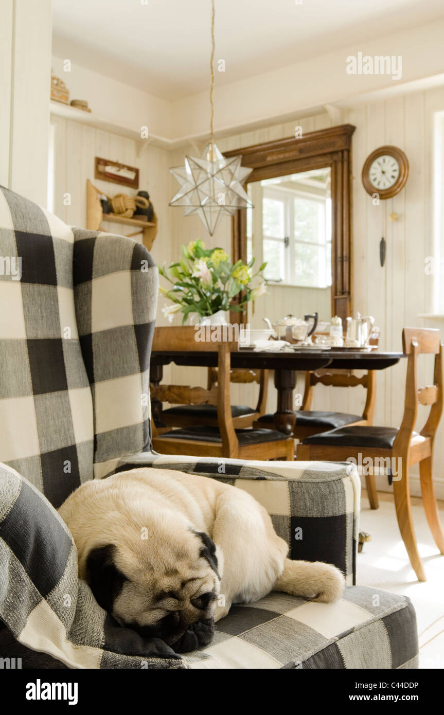 Charming A Pug Lies Sleeping On A Checked Wingback Armchair In Living Room With  Dining Table And Glass Star Lantern