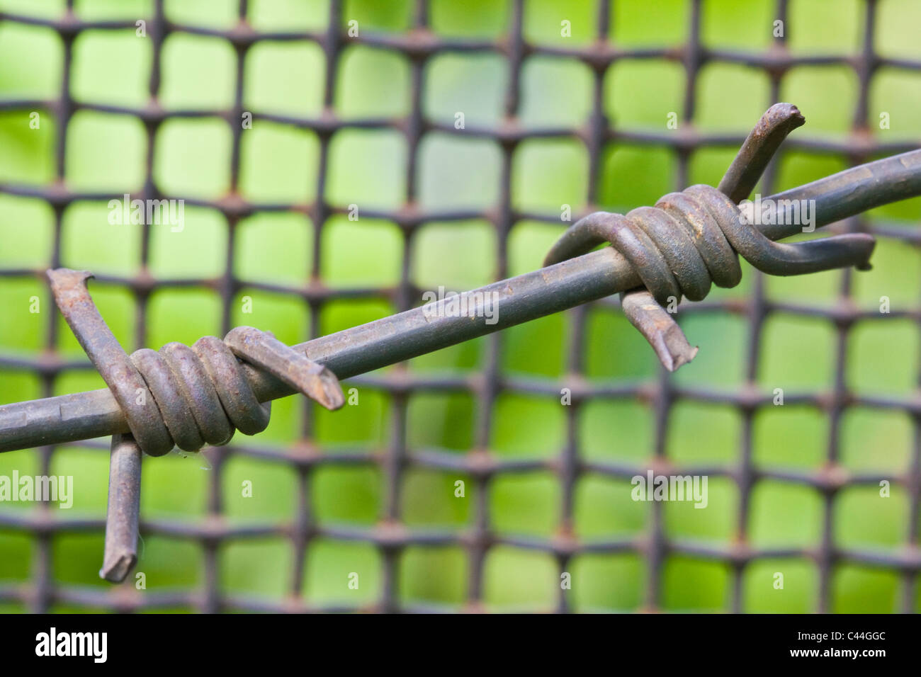 barbed wire and metal lattice against green grass and foliage - Stock Image