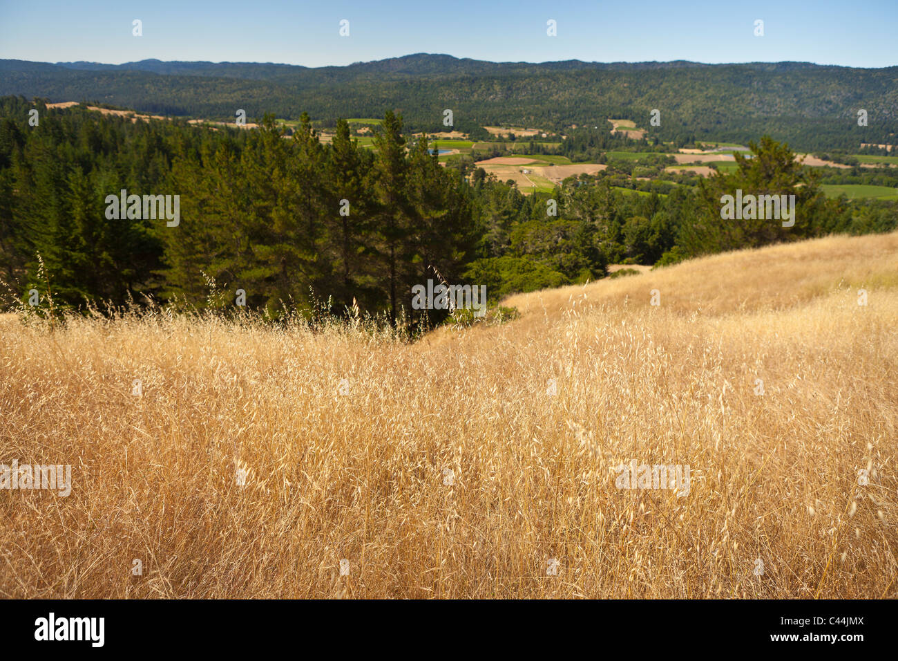 MENDOCINO COUNTY, CALIFORNIA, USA - landscape in Anderson Valley. - Stock Image