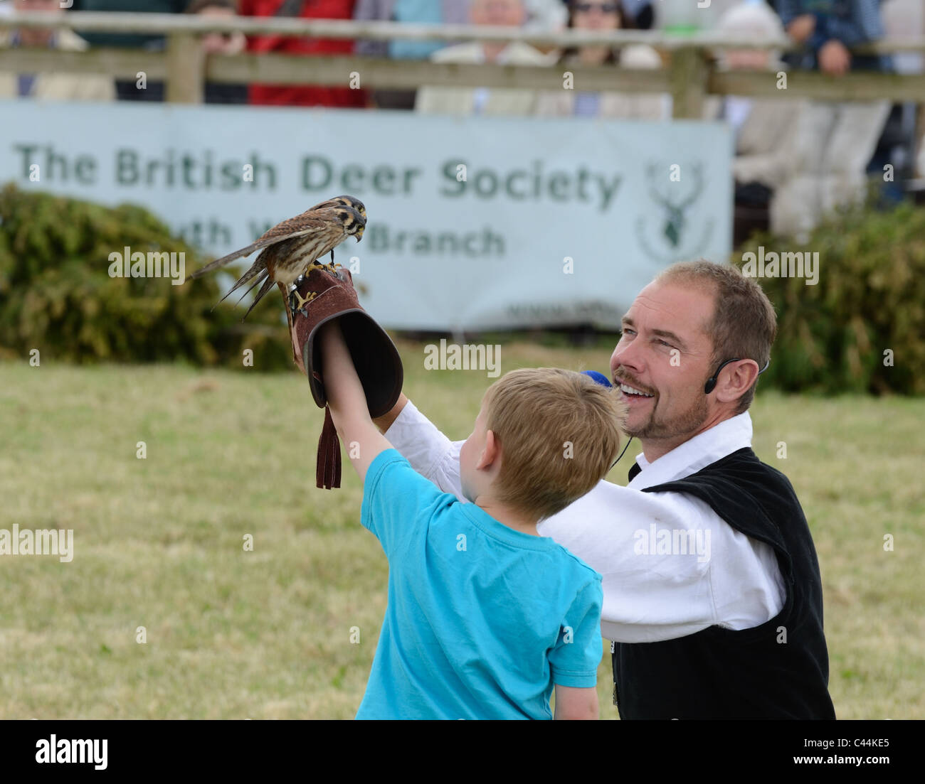 Young boys first experience of falconry with 2 American Kestrels - Stock Image