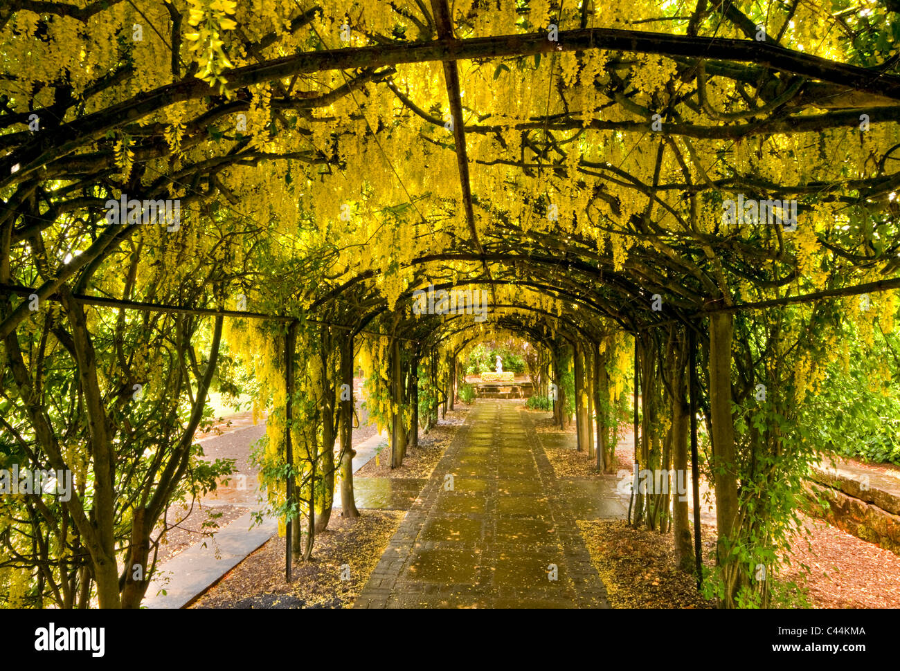 The Laburnum Arch, Ness Botanical Gardens, The Wirral, Merseyside, England,  UK