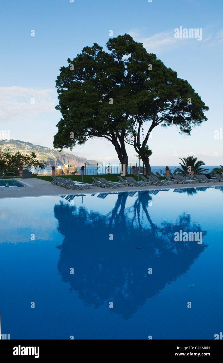 Poolside Trees, Reid's Palace Hotel, Funchal, Madeira - Stock Image