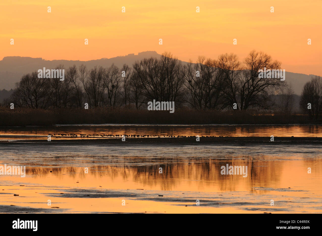 Dusk, Lake of Constance, lake, willows, trees, reflections, near Hochst, Vorarlberg, Austria - Stock Image