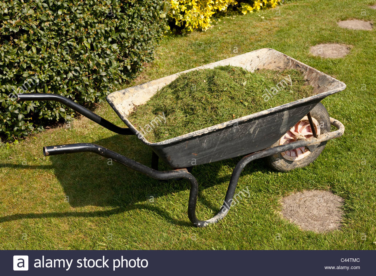 Wheelbarrow full of grass clippings - Stock Image