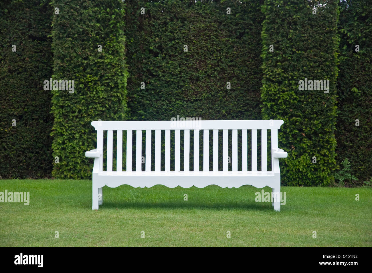 White bench against a dark green Yew Hedge. UK - Stock Image